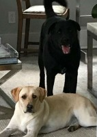 Cuomo family pets- Tennessee & Alabama